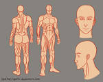 Adult Male body reference sheet 2.0