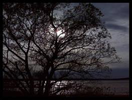 Sunset Behind Trees by gabrielslair