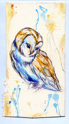 Complimentary Owl by Stargazer-Gemini