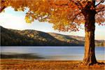 An Autumn's Day