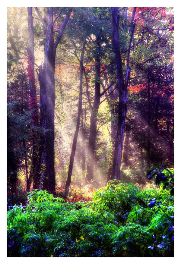 Morning Rays by DennisChunga