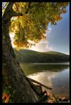 Under The Tree by DennisChunga