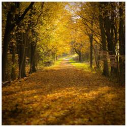 Last Days Of Autumn by DennisChunga