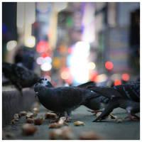Flock Together by DennisChunga