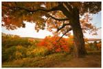 Autumn Daze by DennisChunga