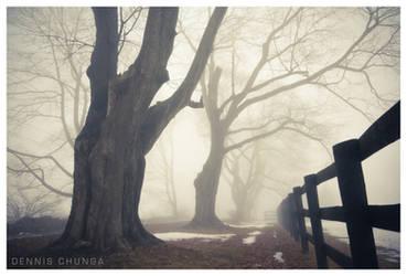 Winter Daze