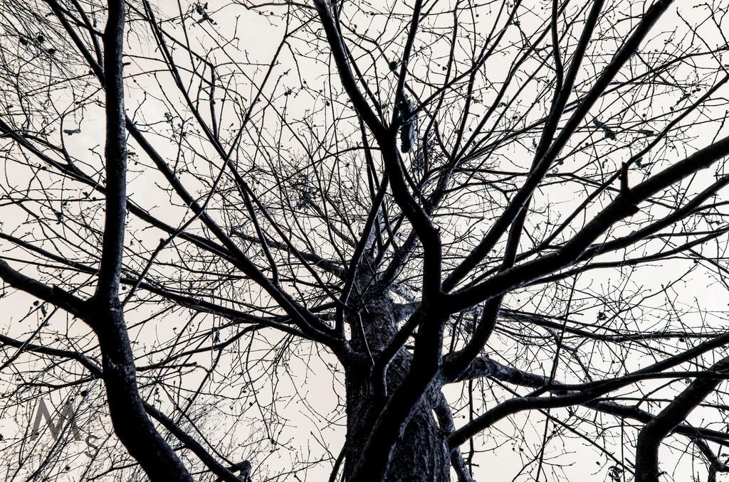 Tree series I by seredream