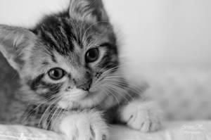 kitten series, I by seredream