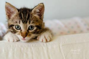 kitten series, III by seredream