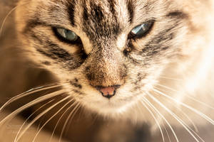kitten series, II by seredream