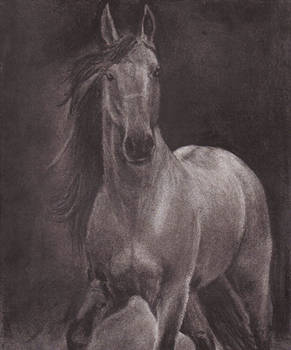Horse series 3.