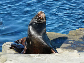Best Seal Ever