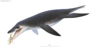 Acostasaurus pavachoquensis by DuskyVel