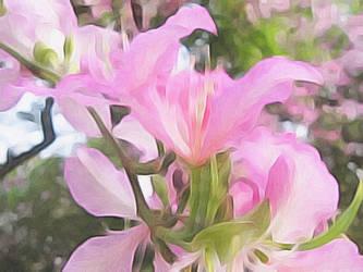 Hong Kong Orchid Tree Blossoms by digivuza