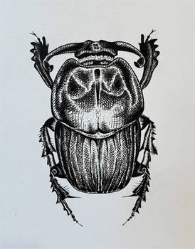 Beetle Pen Illustration