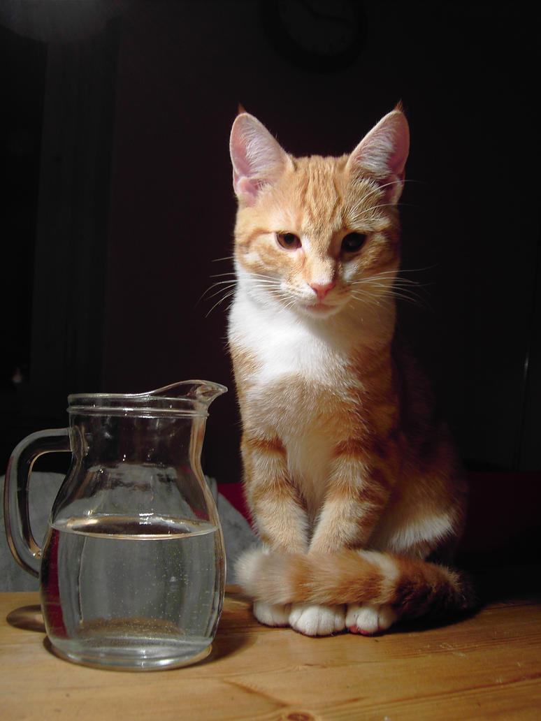 cat and water_by akinna-stock by akinna-stock