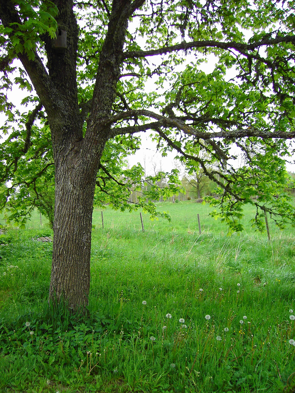 tree2_by akinna-stock by akinna-stock