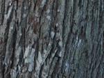 bark texture2