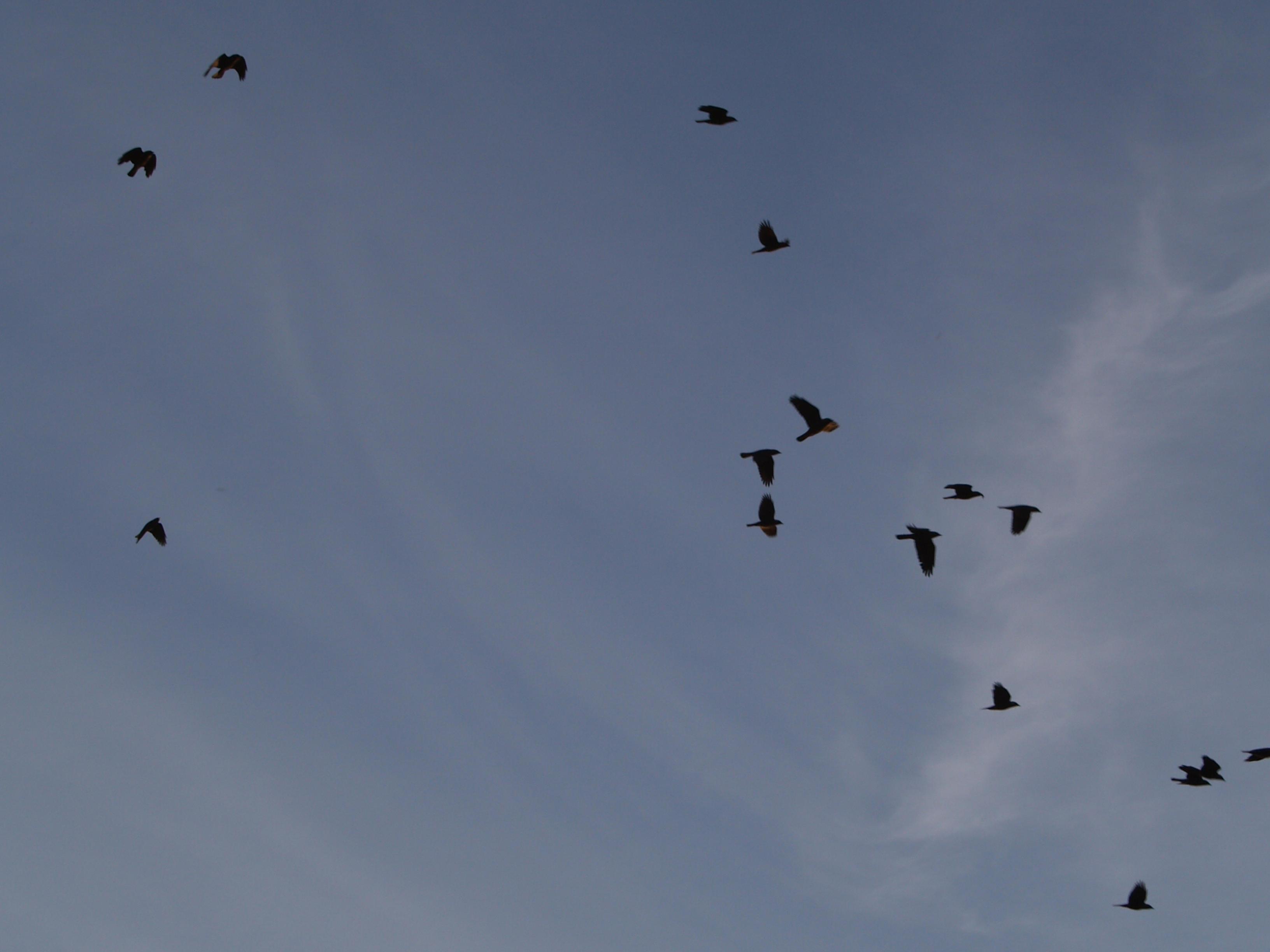 birds in the sky 1 by akinna-stock