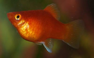 fish06 by akinna-stock