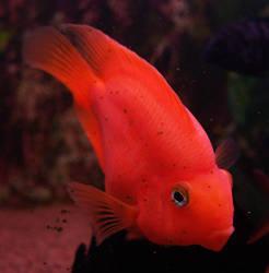 fish07 by akinna-stock