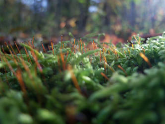 Moss Close-Up by FightingCrusader