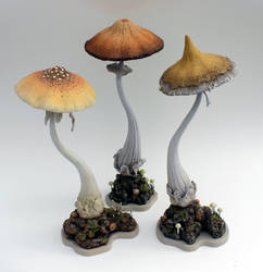 Make room for the Mystical Mushrooms