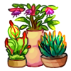 Mini Garden - Color Splash