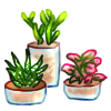 Mini Garden - Haworthia and Friends by LiticaHarmony