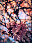 Fabulous Springtime