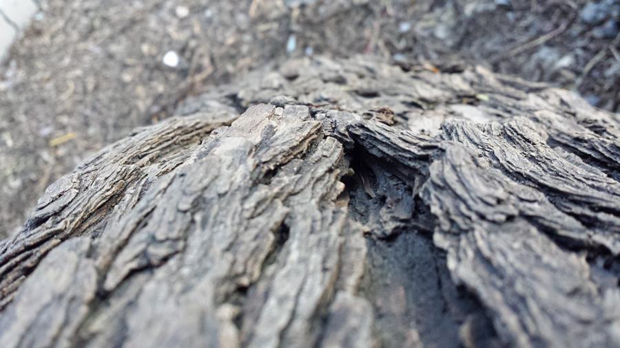 tree's ID by oridzuru