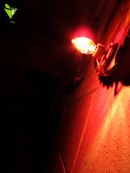 REDD by blacsteel