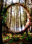 Portal Through The Woods by Asphodel-Foxx