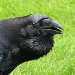 Elthalen's Profile Picture