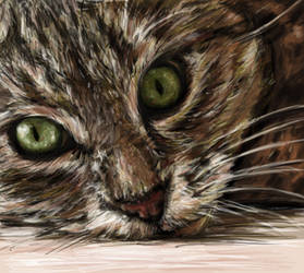 CAT by LilioTheOne