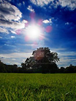 Sun Above Tree