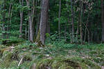 Woods stock by NHuval-stock