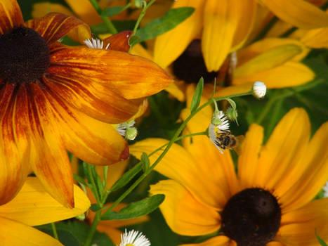 Flower Fields - Onision