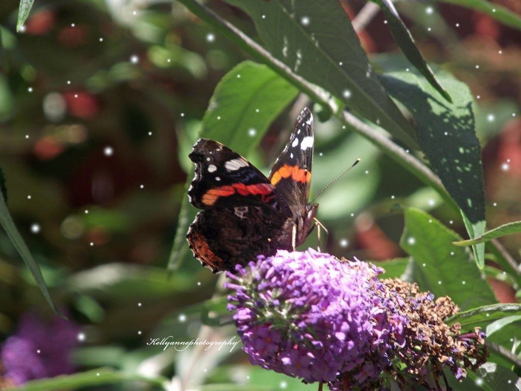 Butterfly flying away - photo#43