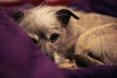 Chai Purple Blanket by viewfinder