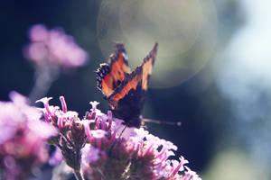 Butterfly I by bippla