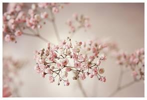 Birthdayflower by bippla