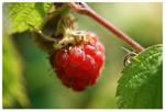 Raspberry by bippla