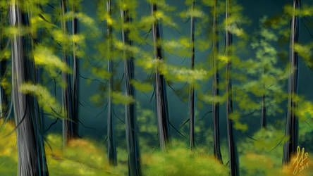 Forest by Rienquish