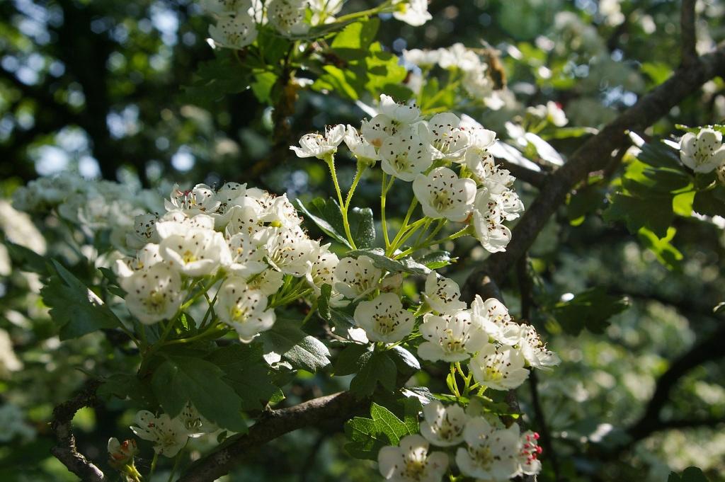 White flower by Berneyman