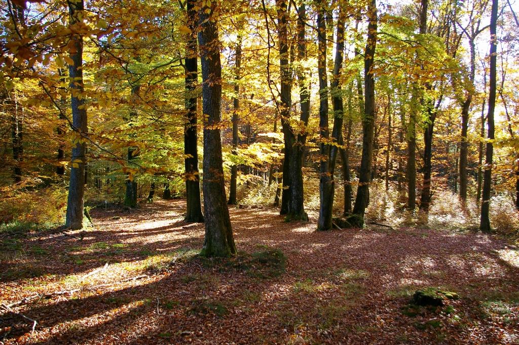 autumn wood by Berneyman