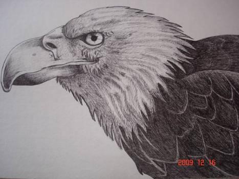 Eagle drawing!