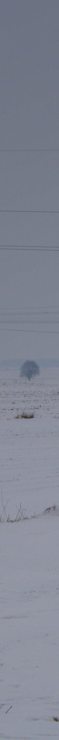lyse drzewo ucieklo z kulki by Sitizel