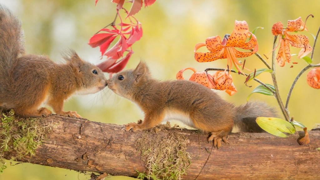 image gallery squirrel love