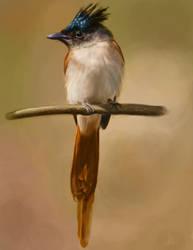 Asian Paradise Flycatcher Digital Painting by Aracama